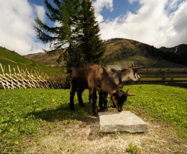 Lust auf Bauernhof_11