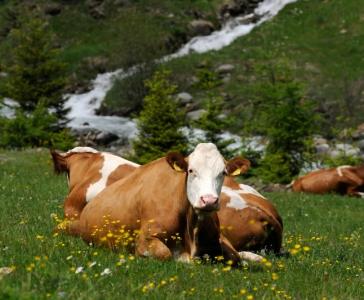Lust auf Bauernhof_14