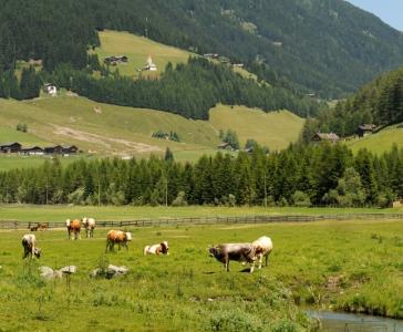 Lust auf Bauernhof_5