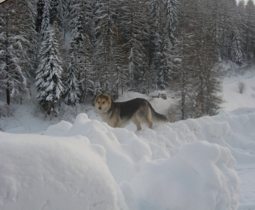 winter016_20121213_1319985462